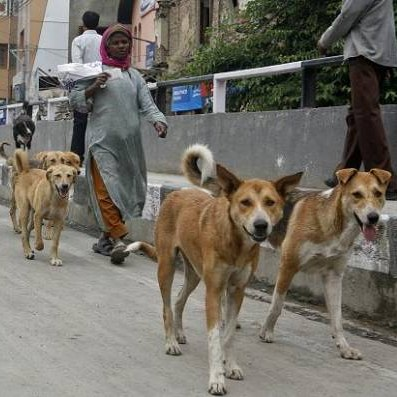 Stray dogs to form security squad in India