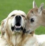 Geoffrey and kipper