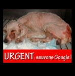 Guadeloupe, Google a dog stoned scaled and abandoned
