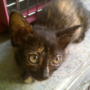 Josephine like her brothers is looking for a home