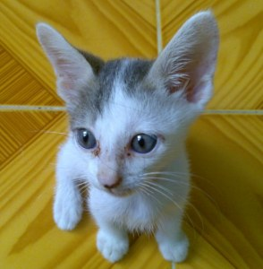 Tobey little kitty very kind is waiting for you