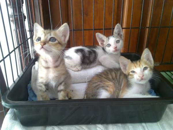 3 chatons a adopter