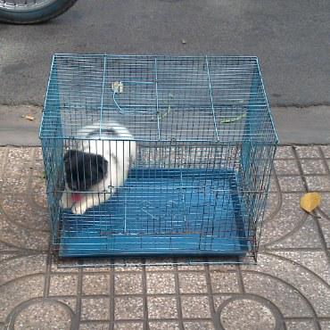 vietnam un chiot dans une cage d 39 oiseau le savoir vivre vietnamien. Black Bedroom Furniture Sets. Home Design Ideas