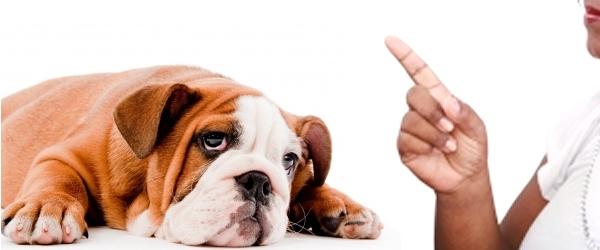 Je te dis non mon chien
