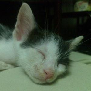 Arnold chaton de 8 semaines trouvé dans une poubelle