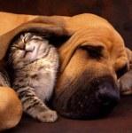 Citations sur les droits des animaux