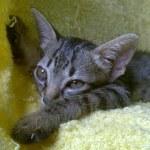 Ed est un jeune chat qui aime beaucoup jouer
