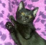 Petit Toto et Les Chats Errants