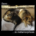 Adoption...la métamorphose de Saxo