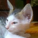 William le chaton sauvé mais sans ses frères et soeurs