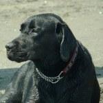 Au péril de sa vie pour sauver un autre chien