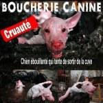 Cruauté humaine envers les animaux
