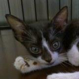 Con mèo Corrina con thật may mắn được cứu sống đang hấp hối trong cơn mưa tầm tã