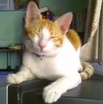 Freddie là một con mèo đực đáng yêu, nó cần được yêu thương