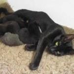 Bản năng người mẹ của một con mèo cái đối với con của nó là ấn tượng sâu sắc