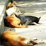 Gabon slaughter of stray dogs