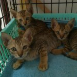 Bill Bob and Burt three kittens are waiting for you
