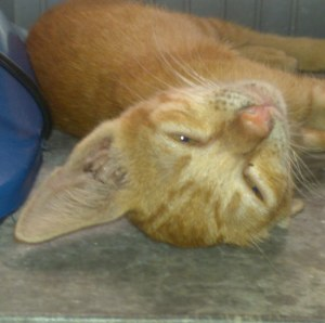 Loving cat called Cam needs a family