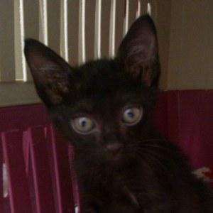 Den a little black cat who is not shy