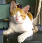 Freddie a six months young cat needs you.