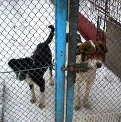 Killing of stray dogs in Ukraine
