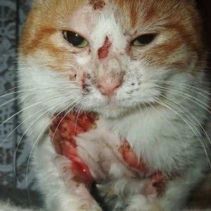 The Killing of a stray cat