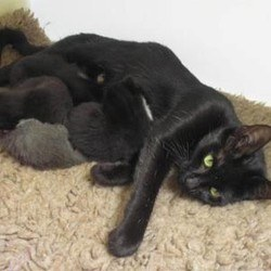A pussy leads his rescuer to his litter of kittens