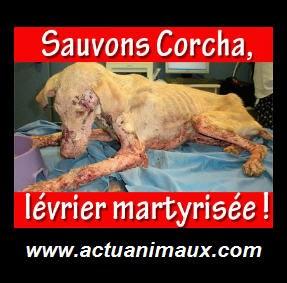 Save and help Corcha