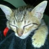 Jezebel very cute cat needs you