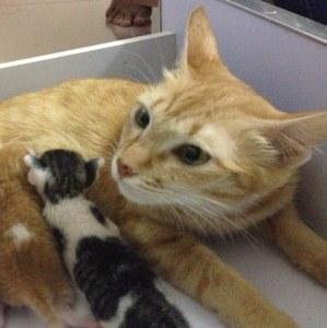 A tiny female kitten abandoned