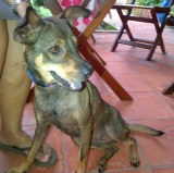 Lulu a sweet young female dog looking for a home