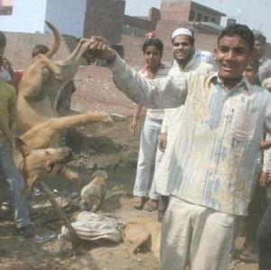 Killings of dogs in Meerut