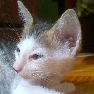 William the kitty rescued but without his brothers and sisters