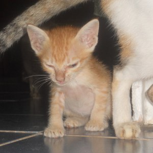Ruky a caramel kitten is waiting for you