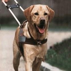 Avion un chien de guide sème la panique