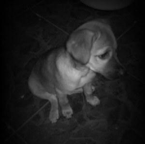 Dolly une jeune chienne sauvée