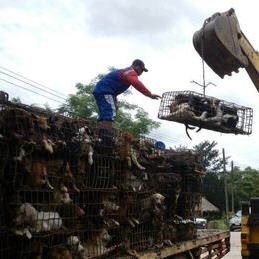Soi Dog Foundation a besoin d'aide