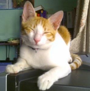 Freddie jeune chat de six mois a besoin de vous.