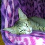 Mary une petite chatte abandonnée