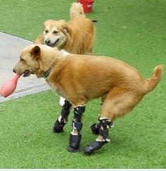 Naki'o chien bionique