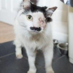 Un chat attaqué et laissé pour mort