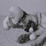Une chienne protège un nouveau né humain abandonné