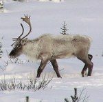 Animaux sauvages d'Amérique du Nord en hiver