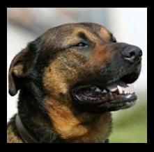 Suisse les collectivités se préparent à gérer les lois sur les chiens