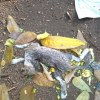 Deux chatons abandonnés morts