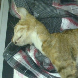 Un chat tué par plaisir