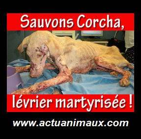 Sauvons et aidons Corcha