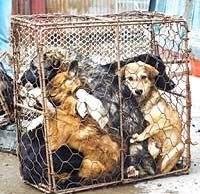 Thailande un millier de chiens sauvés