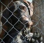 La fourrière de Plouzané (29) dénoncée par la Fondation Brigitte Bardot