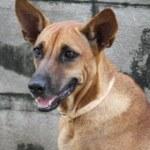 Merci Soi Dog Foundation